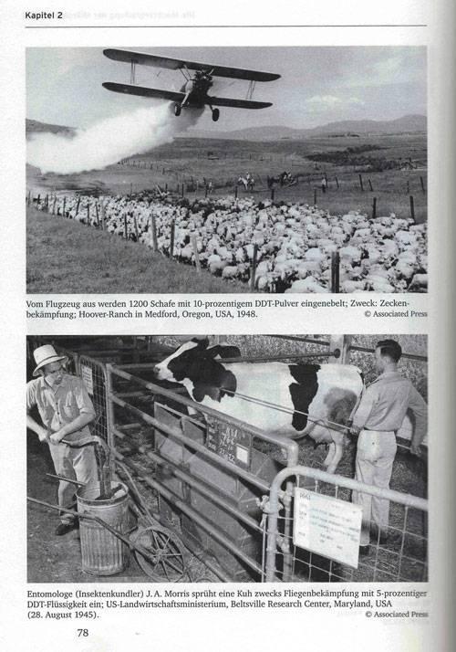 Фото вверху овец обрабатывают 10 ным